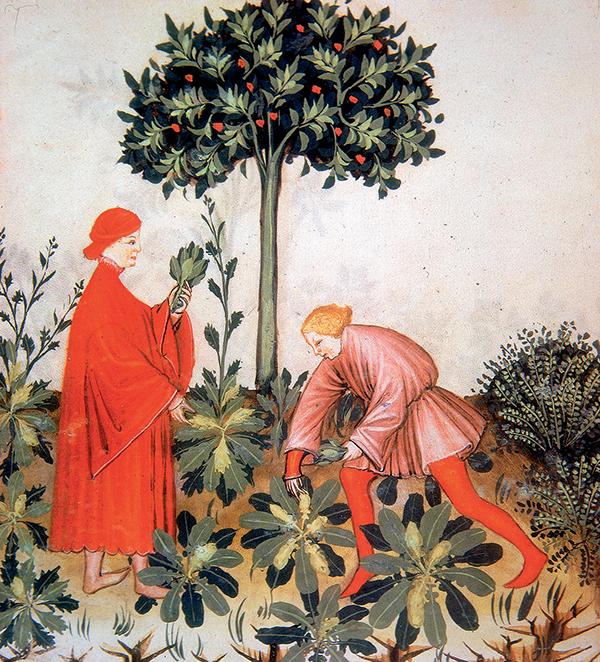 Pierre de Ronsard - Salade