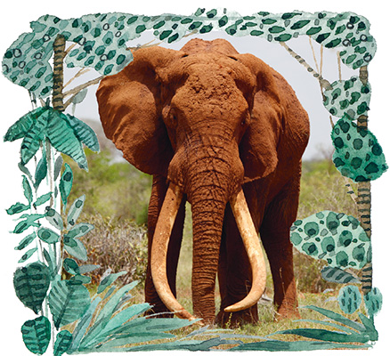 Satao, l'éléphant sans défenses